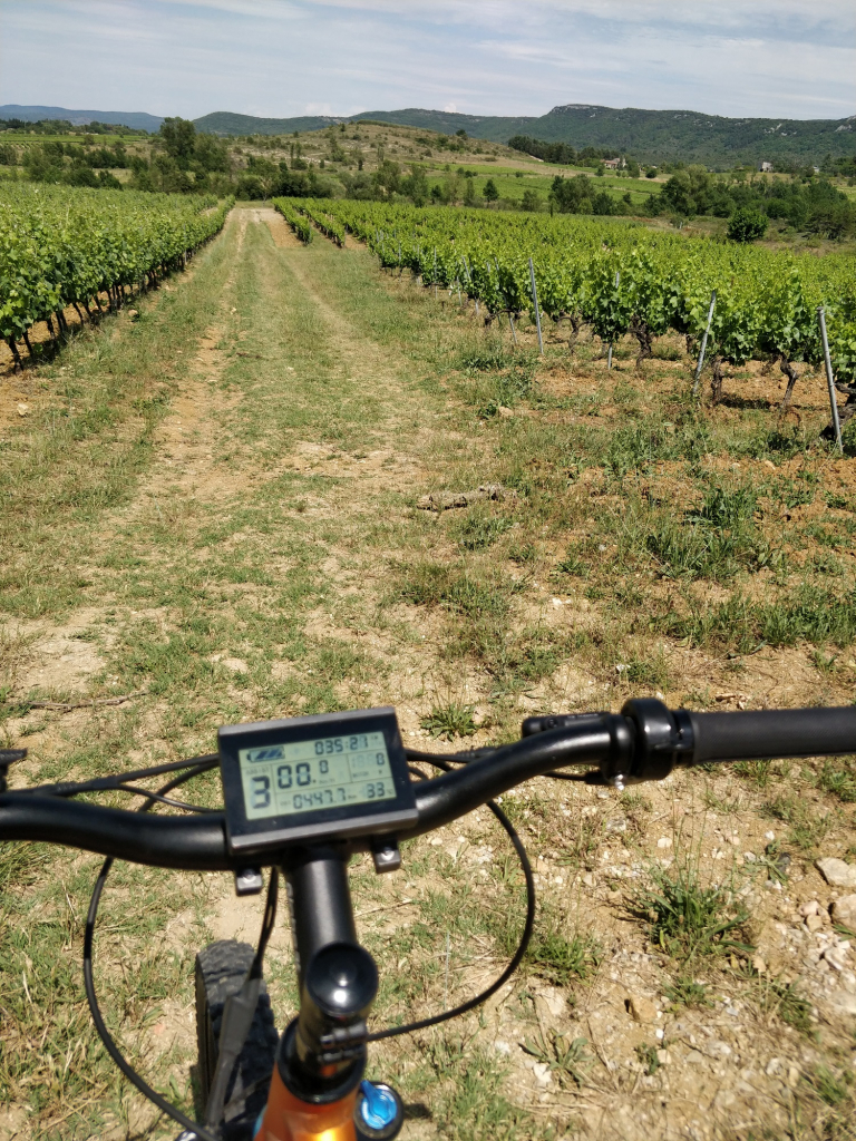 Electronic scooter in the vines